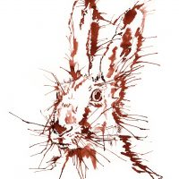 Rabbit Hare canvas prints