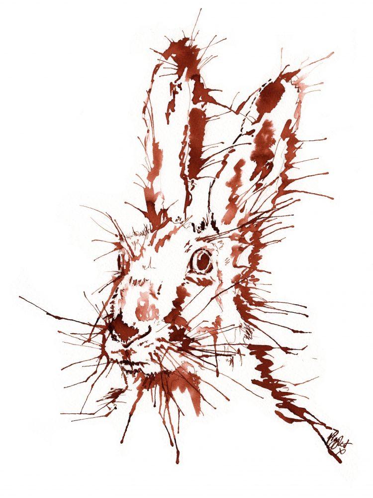 Rabbit Hare canvas prints