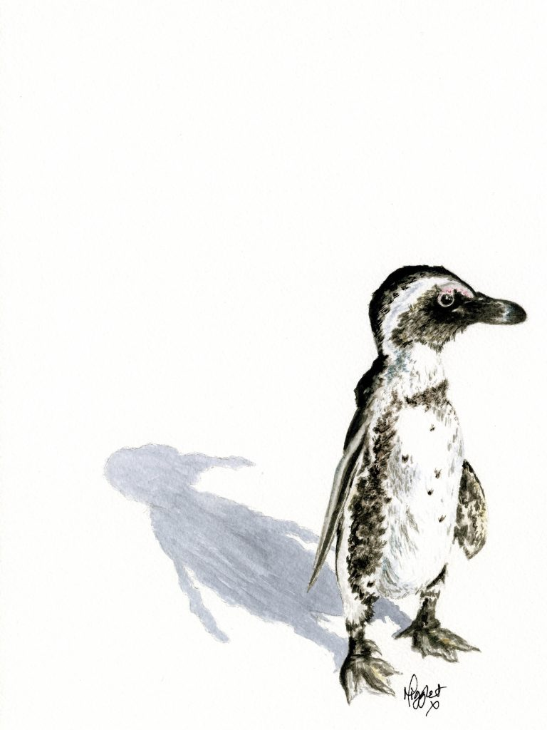 Penguin canvas prints