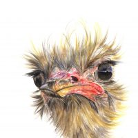 Emu Ostrich canvas prints
