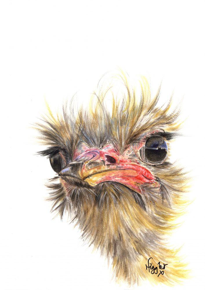 Emu Ostrich canvas prints