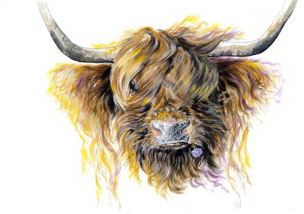 Highland Cattle canvas prints