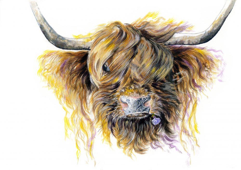 Highland Cattle canvas prints