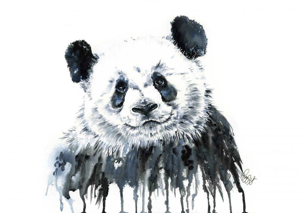 Panda canvas prints