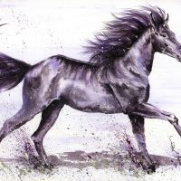 Horse canvas prints