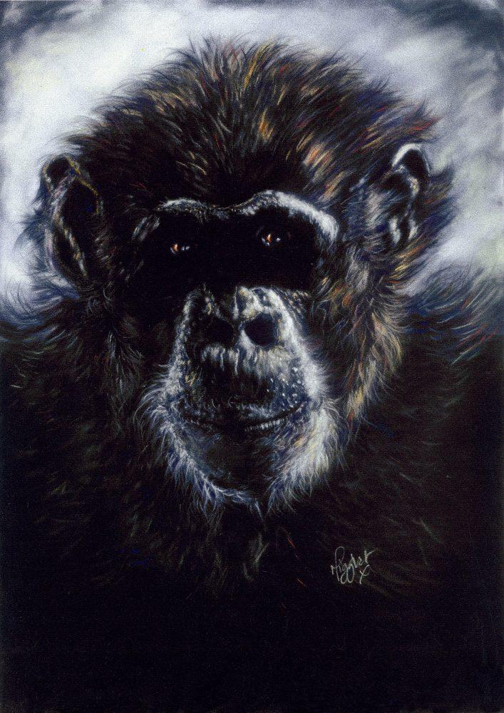 Chimpanzee Monkey Gorilla canvas prints